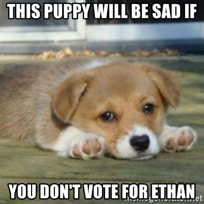 sad puppy face - this puppy will be sad if you don't vote for Ethan