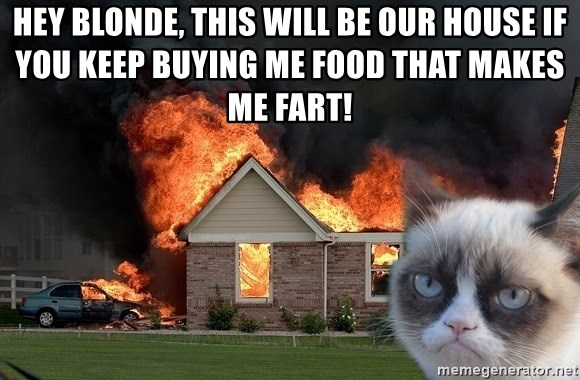 grumpy cat 8 - HEY BLONDE, THIS WILL BE OUR HOUSE IF YOU KEEP BUYING ME FOOD THAT MAKES ME FART!