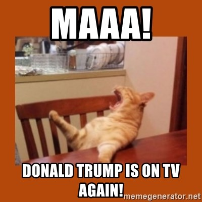 Maaa Donald Trump Is On Tv Again Ma The Meatloaf Cat Meme