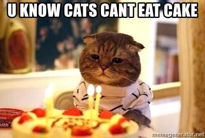 U Know Cats Cant Eat Cake
