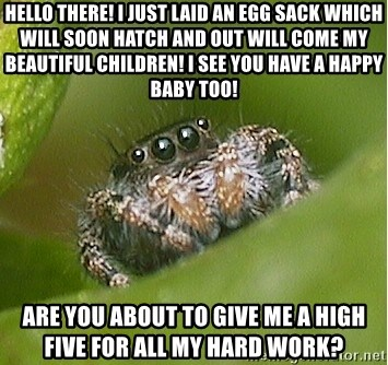misunderstood spider - hello there! I just laid an egg sack which will soon hatch and out will come my beautiful children! I see you have a happy baby too! aRE YOU ABOUT TO GIVE ME A HIGH FIVE FOR ALL MY HARD WORK?