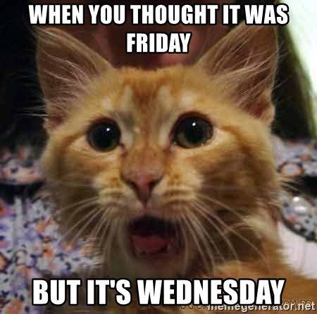 Crazy cat - When you thought it was friday But it's wednesday