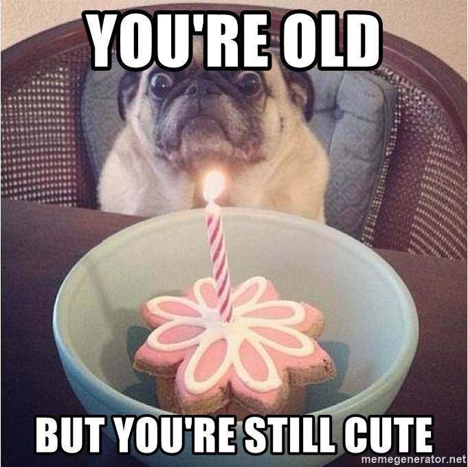 You're old But you're still cute - Birthday Pug | Meme Generator