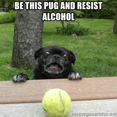 Ermahgerd Pug - Be this pug and resist alcohol