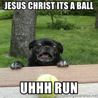 Ermahgerd Pug - JESUS CHRIST ITS A BALL UHHH RUN