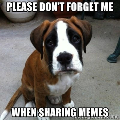 Please Dont Forget Me When Sharing Memes Sad Puppy Eyes Meme