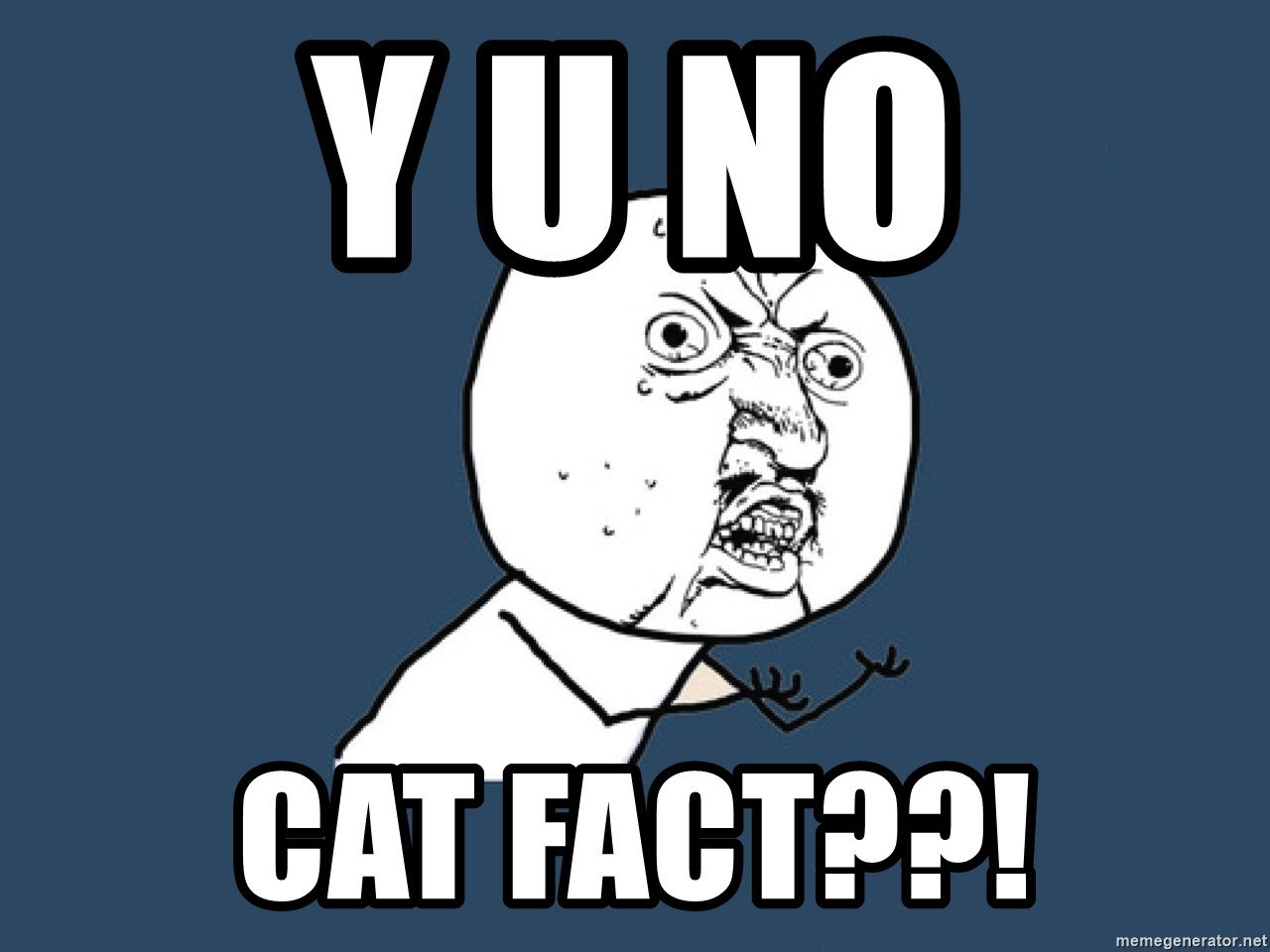 Y U No - Y U NO cat fact??!