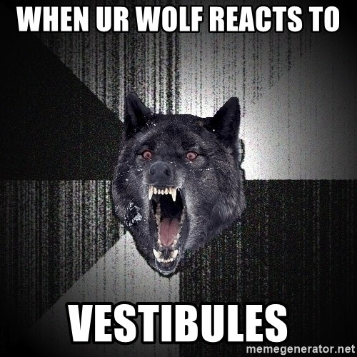 xymixihb - when ur wolf reacts to  VESTIBULES