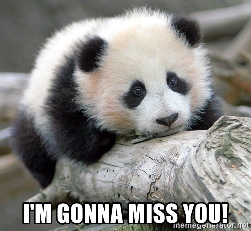 Im Gonna Miss You Sad Panda Meme Generator