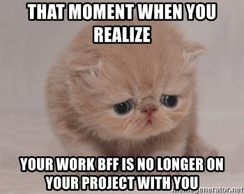 Super Sad Cat - That moment when you realize your work bff is no longer on your project with you