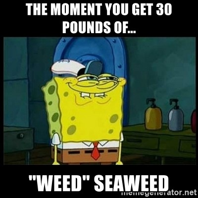 """Don't you, Squidward? - The MOMENT you get 30 pounds of... """"Weed"""" seaweed"""