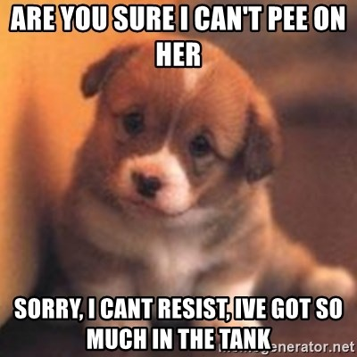 cute puppy - Are you sure I CAN'T PEe on HER  Sorry, I cant resist, ive got so much in the tank