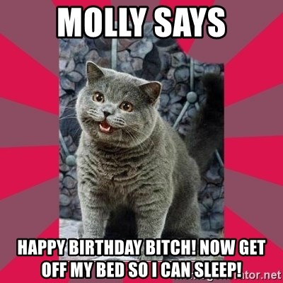 I can haz - molly says happy birthday bitch! now get off my bed so i can sleep!