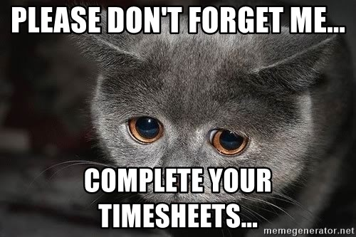 Please Dont Forget Me Complete Your Timesheets Sad Cat