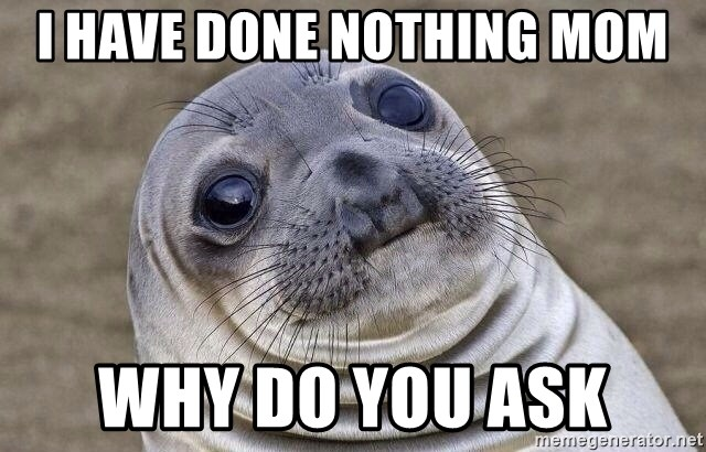 Awkward Seal - i have done nothing mom why do you ask