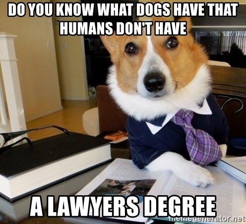 Dog Lawyer - Do you know what dogs have that humans don't have A lawyers degree
