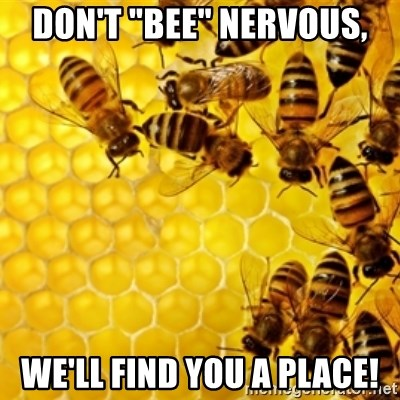 """Honeybees - Don't """"bee"""" nervous, We'll find you a place!"""