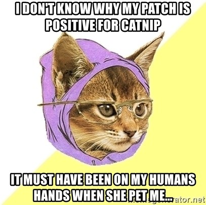 Hipster Kitty - I don't know why my patch is positive for catnip it must have been on my humans hands when she pet me...