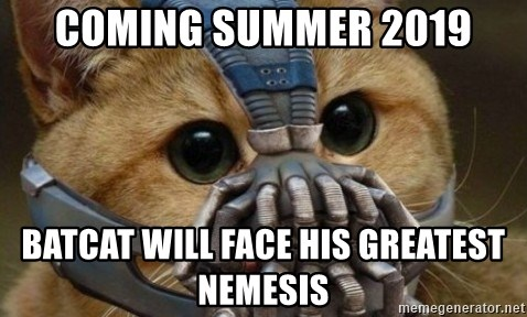bane cat - coming summer 2019 batcat will face his greatest nemesis