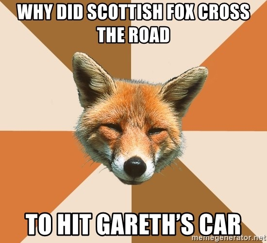 Condescending Fox - Why did Scottish fox cross the road To hit Gareth's Car