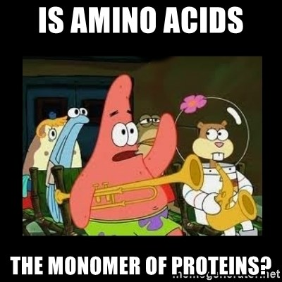 Patrick Star Instrument - Is amino acids  the monomer of proteins?
