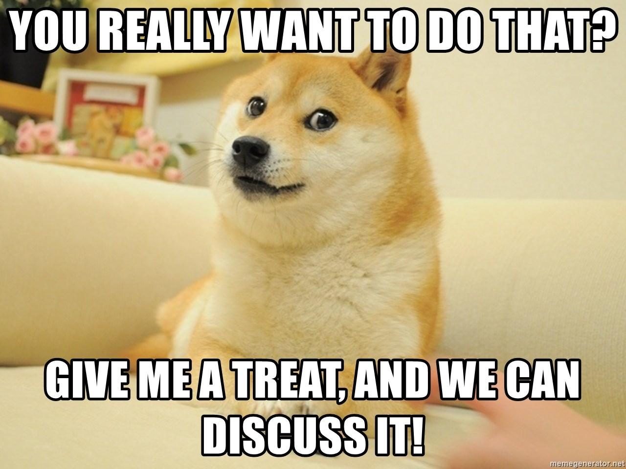 so doge - You really want to do that? Give me a treat, and we can discuss it!