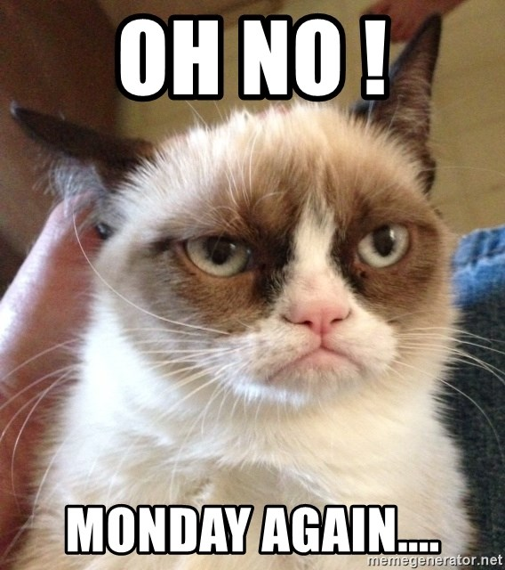 Mr angry cat - Oh No ! Monday again....