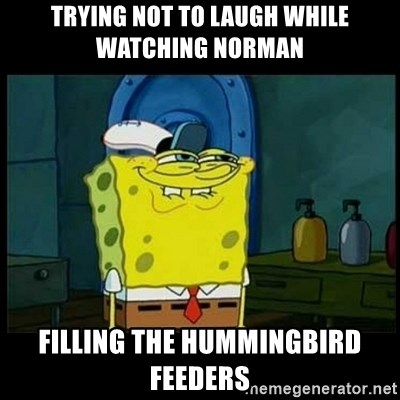 Don't you, Squidward? - Trying not to laugh while watching Norman filling the hummingbird feeders