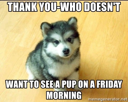 Baby Courage Wolf - Thank you-who doesn't  want to see a pup on a friday morning