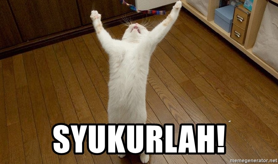 praise the lord cat - Syukurlah!