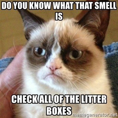 Grumpy Cat  - Do you know what that smell is Check all of the litter boxes