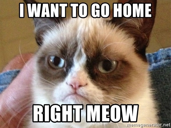 Angry Cat Meme - I want to go home Right Meow