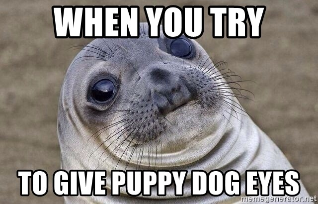 Awkward Seal - When you try To give puppy dog eyes