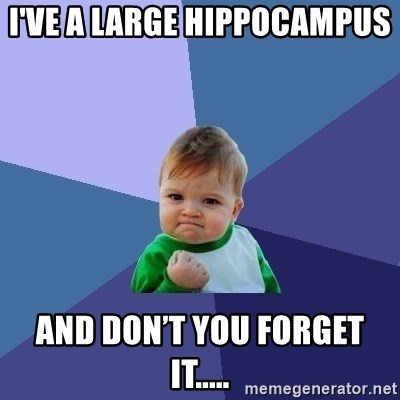 Success Kid - I've a large hippocampus  And don't you forget it.....