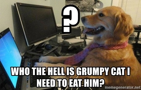 I have no idea what I'm doing - Dog with Tie - ? who the hell is grumpy cat i need to eat him?