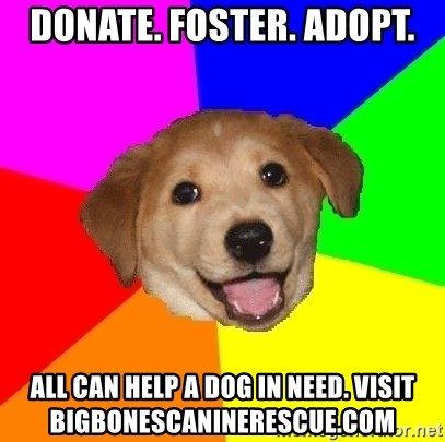 Advice Dog - Donate. Foster. Adopt. All can help a dog in need. Visit bigbonescaninerescue.com