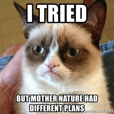 Grumpy Cat  - i tried but mother nature had different plans