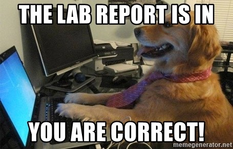 I have no idea what I'm doing - Dog with Tie - The lab report is in You are correct!