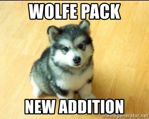 Baby Courage Wolf - Wolfe Pack New addition