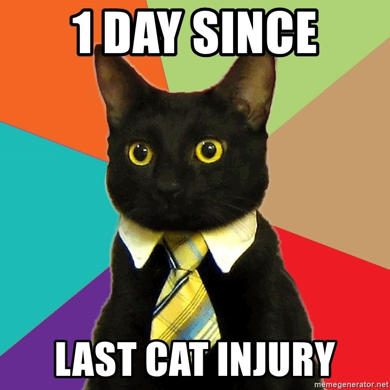 Business Cat - 1 Day since last cat injury