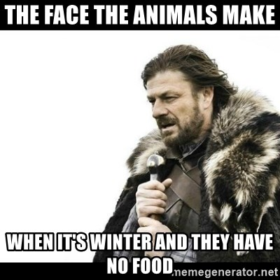 Winter is Coming - The face the animals make  when it's winter and they have no food