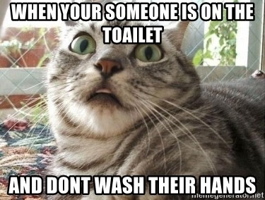 scared cat - When your someone is on the toailet and dont wash their hands