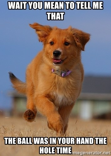 Ridiculously Photogenic Puppy - WAIT YOU MEAN TO TELL ME THAT THE BALL WAS IN YOUR HAND THE HOLE TIME
