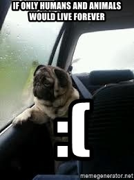 introspective pug - If only humans and animals would live forever  :(