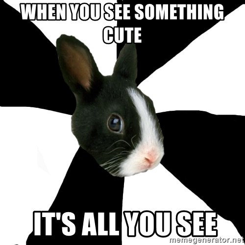 Roleplaying Rabbit - when you see something cute   it's all you see