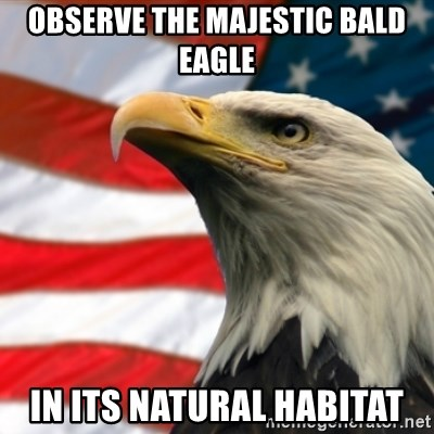 Observe the majestic bald eagle In its natural habitat