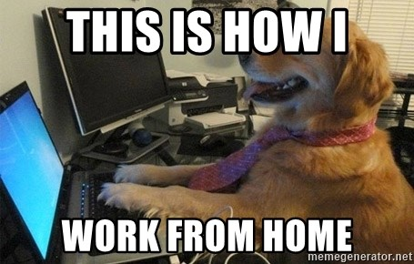 I have no idea what I'm doing - Dog with Tie - This is how I work from home
