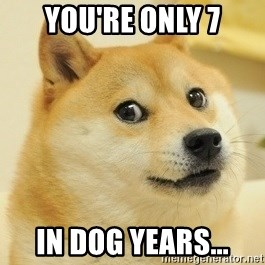 Dogeeeee - You're only 7 in dog years...