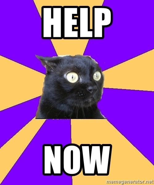 Anxiety Cat - HELP NOW