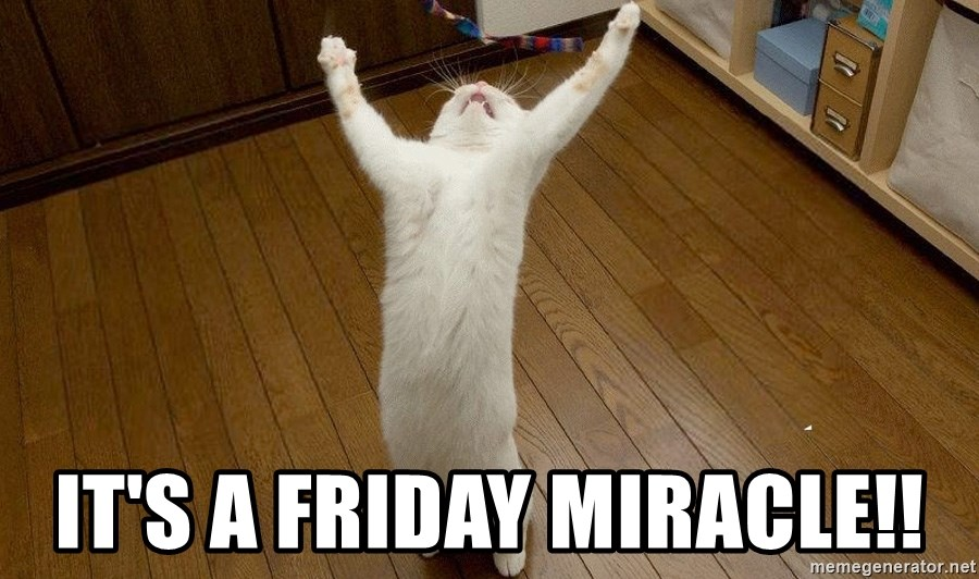 praise the lord cat - It's a Friday miracle!!